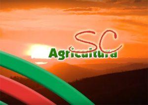 TV da Epagri: SPDH, sacolas ecológicas e pesquisa com maracujazeiro são destaques