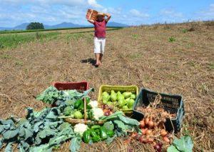 Cuidar do solo para produzir mais
