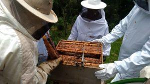 Bandeirante realiza curso de apicultura