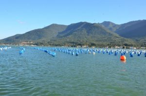 Inscrições abertas para workshop sobre qualidade da água para produção de moluscos
