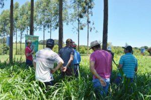 Epagri realiza atividade voltada à bovinocultura leiteira em Xaxim