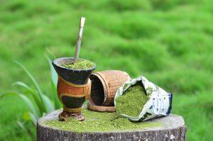 Canoinhas promove oficina para o plantio de erva-mate