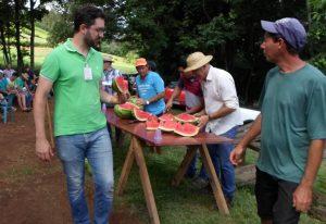 Aberta a colheita da melancia em Caxambu do Sul