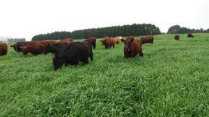 Estudo mostra impacto do manejo das pastagens na pecuária de corte