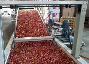 Colheita de maçã e pera segue com força no Planalto Norte