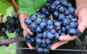 Curso de vinhos artesanais capacita produtores em Lajeado Grande