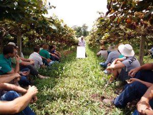 Porto União promove dia de campo sobre cultivo de videira orgânica