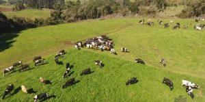Família de Herval d'Oeste mostra a evolução da pecuária leiteira