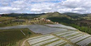 Santa Catarina: um roteiro imperdível para quem aprecia vinhos de alta qualidade