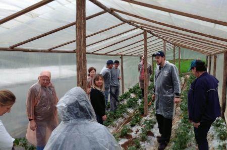 Epagri promoveu atualização técnica de produtores de morango de Porto União