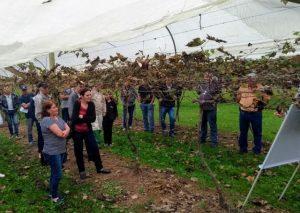 Agricultores de Videira conhecem boas práticas agrícolas na viticultura