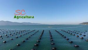 TV da Epagri: Agroindústria de pães e doces, ostreicultura e ensacamento de banana são destaques