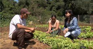 Indígenas incrementam renda e ganham qualidade de vida através do Programa Fomento Rural
