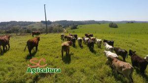 TV da Epagri fala de pecuária leiteira, Agroponte, SPDH e tipos especiais de arroz