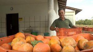 Agroindústrias de polpa de frutas ampliam mercado com registro no MAPA