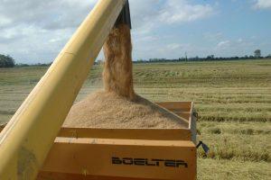 Congresso vai discutir inovação e desenvolvimento na cultura do arroz irrigado