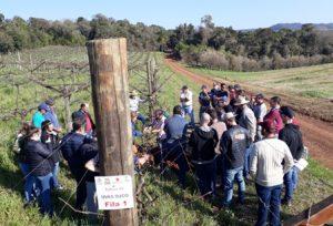 Read more about the article Dia de campo mostra como monitorar pragas em fruteiras temperadas