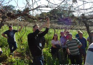 Cultivo de uva é tema de dia de campo em Abdon Batista