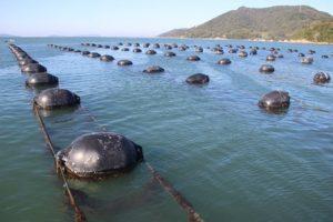 Read more about the article Epagri promove pesquisa em controles sanitários de moluscos com impacto internacional