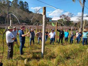 Agricultores de Quilombo aprendem a fazer poda e adubação de videira