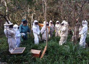 Read more about the article Epagri capacita apicultores de Porto União em manejo produtivo das colmeias