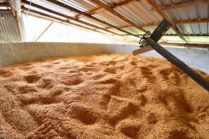 Saiba como construir um silo secador de grãos