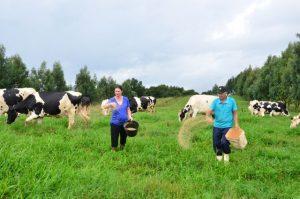 Read more about the article Sobressemeadura de pastagens garante alimento para o gado o ano todo