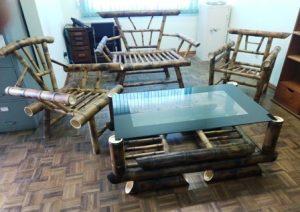 Bambu se torna alternativa de renda para o produtor catarinense