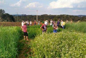 Milhos VPA e plantas de cobertura do solo são temas de reunião em Irineópolis
