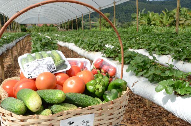 Hortaliça limpa: SC reduz o uso de agrotóxicos e adota rastreabilidade