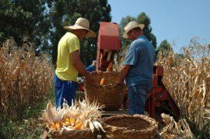 Boletim Agropecuário de outubro destaca alta nos preços pagos ao produtor