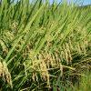 abertura arroz opção 1