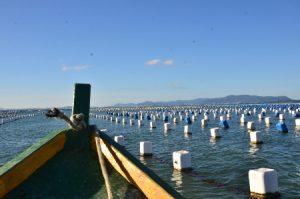 Read more about the article SC cria linha de crédito especial para maricultores e pescadores