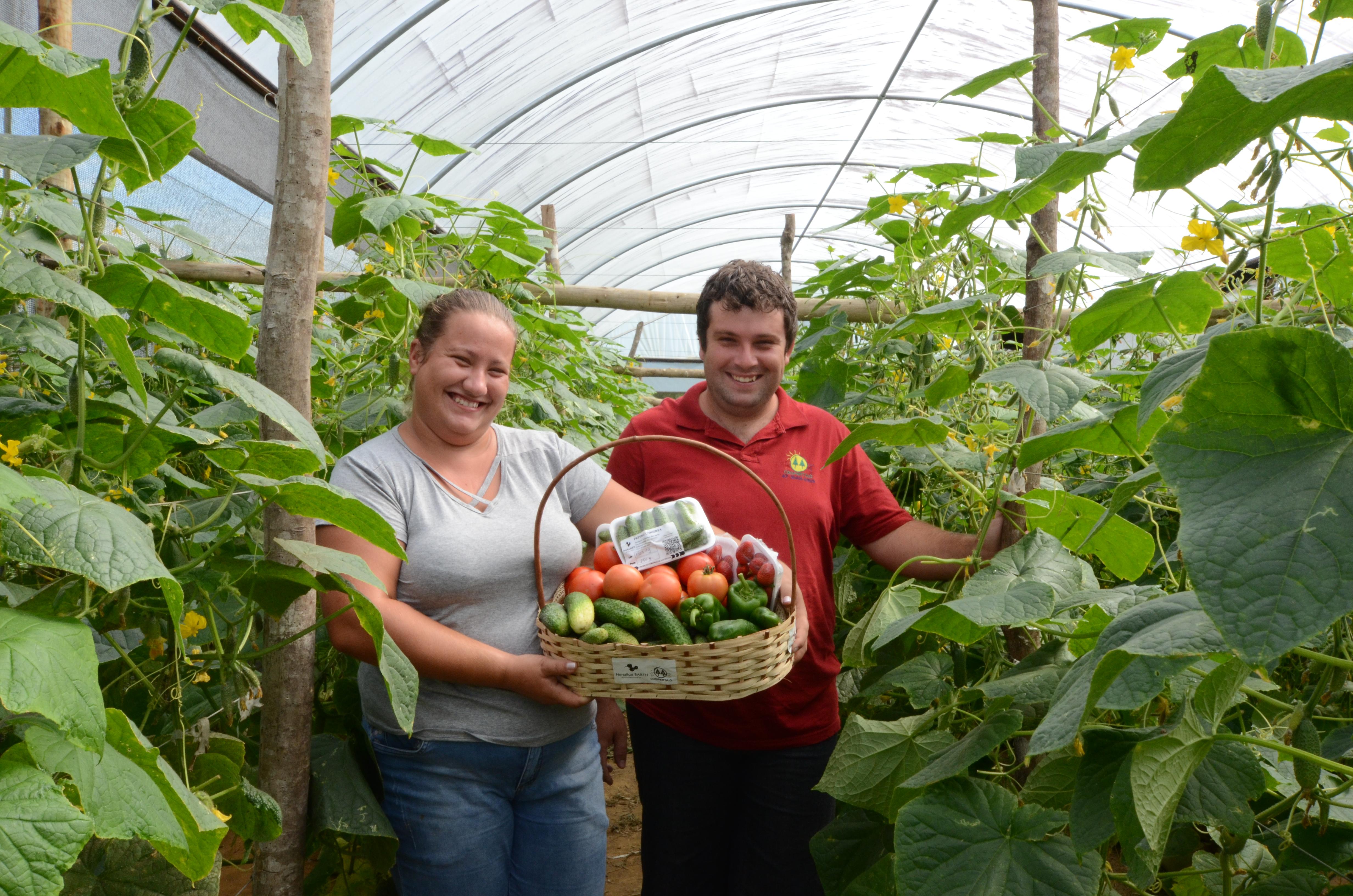 Produção de hortaliças em abrigo mantém jovem rural na propriedade