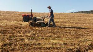 Produção integrada de cebola - hortaliça limpa