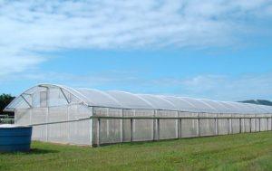Hortaliça orgânica em abrigo de cultivo