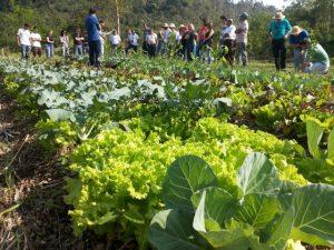 Hortaliça limpa em SPDH