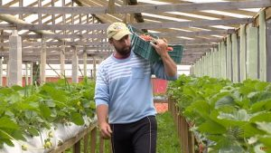 SC é o 4º maior produtor de orgânicos