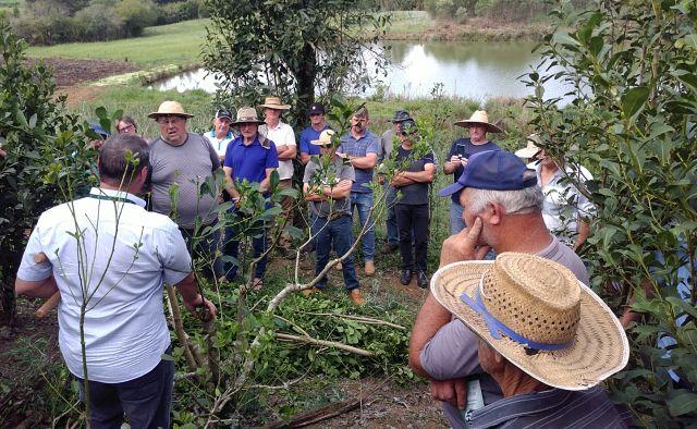 Epagri capacita agricultores de Porto União em poda de erva-mate