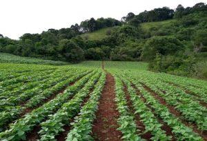 Agricultores debatem tecnologias para produção de feijão em São José do Cerrito