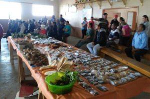 Read more about the article Oficina em Frei Rogério mostra a importância das sementes na diversidade alimentar
