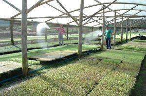 Read more about the article Agricultura familiar responde por metade do faturamento da agropecuária catarinense