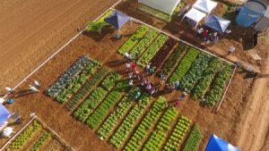 Artigo: Epagri e a agricultura sustentável