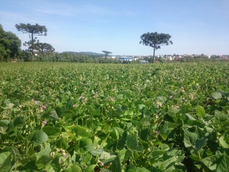 Epagri marca 28 anos de fundação com lançamento de cultivar de feijão em Chapecó nesta quarta