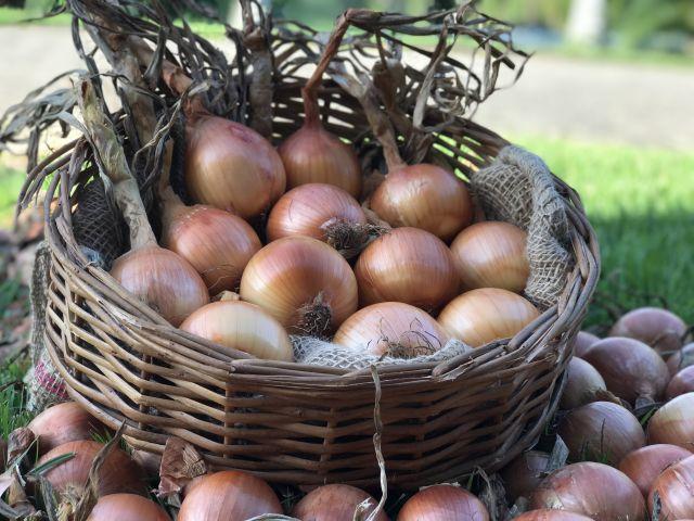 Panorama Agrícola traz análise de mercado para culturas de inverno