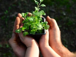 Read more about the article Epagri participa de fóruns de educação ambiental em Brasília
