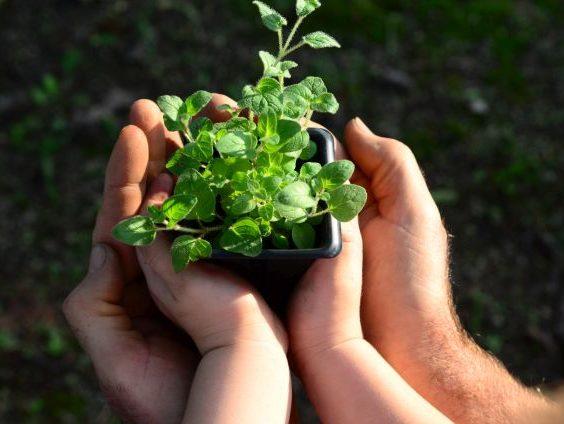 Read more about the article Epagri promove Semana do Meio Ambiente On-line de 31 de maio a 2 de junho