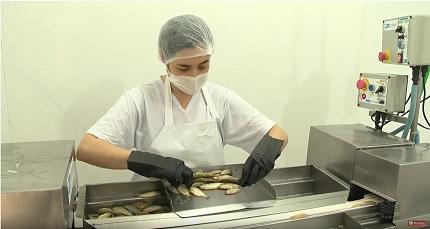 Agroindústria de processamento de lambaris aponta uma alternativa de renda aos piscicultores catarinenses.