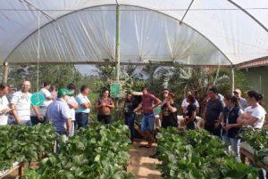 Curso sobre produção de morango semi-hidropônico atrai agricultores do Alto Vale do Itajaí