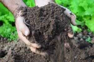 Reflexões sobre o uso do solo e a vida no espaço rural